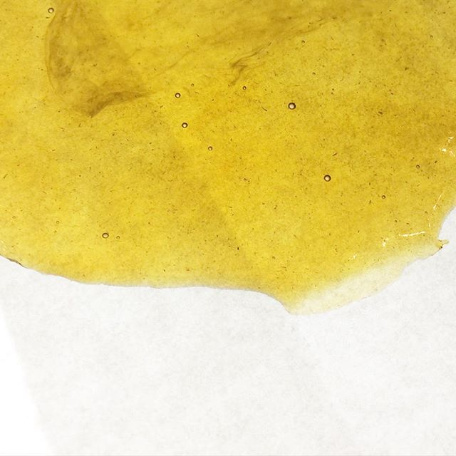 Slab of THC Bomb Rosin is perfect for this lazy Sunday! ☔️☔️ #empressextracts #rosin #rosintech #terps #solventless #squish #dabs #710 #wax #stoneysunday #bayareastoners #weed #cannabis #cannabiscommunity #natural #nugrun #trichomes