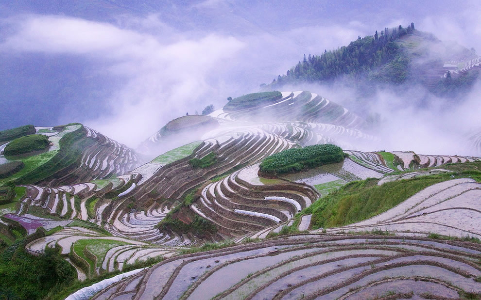 Rice-terraces-in-early-morning-mist-Guangxi-Province-China.jpg