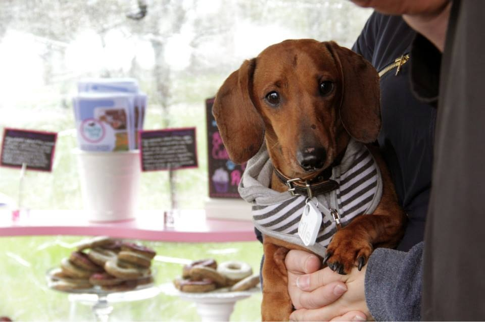 Cheeky Dog Bakery Blog - Cheeky Dog Adventures