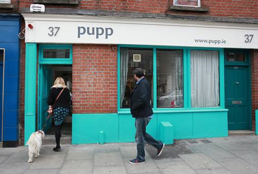 Restaurant review - Pupp: dog about town - Katy McGuinness