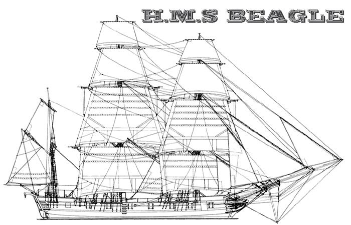 HMS Beagle (Spice Tobacco)