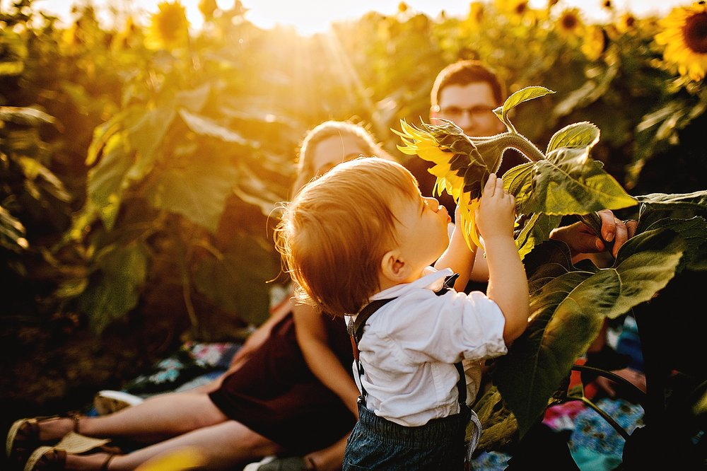 Schreiner-family-lauren-grayson-cleveland-photographer-sunflower-field-session_0017.jpg