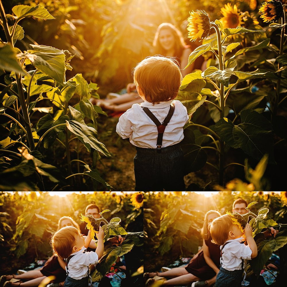Schreiner-family-lauren-grayson-cleveland-photographer-sunflower-field-session_0018.jpg