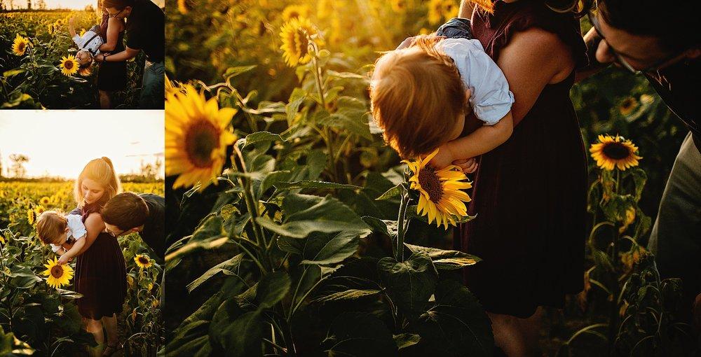 Schreiner-family-lauren-grayson-cleveland-photographer-sunflower-field-session_0023.jpg