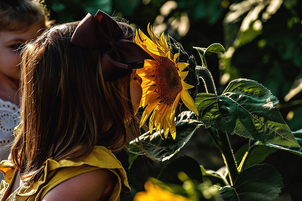 Rutherford-family-cleveland-photographer-lauren-grayson-sunflower-field-session_0001.jpg