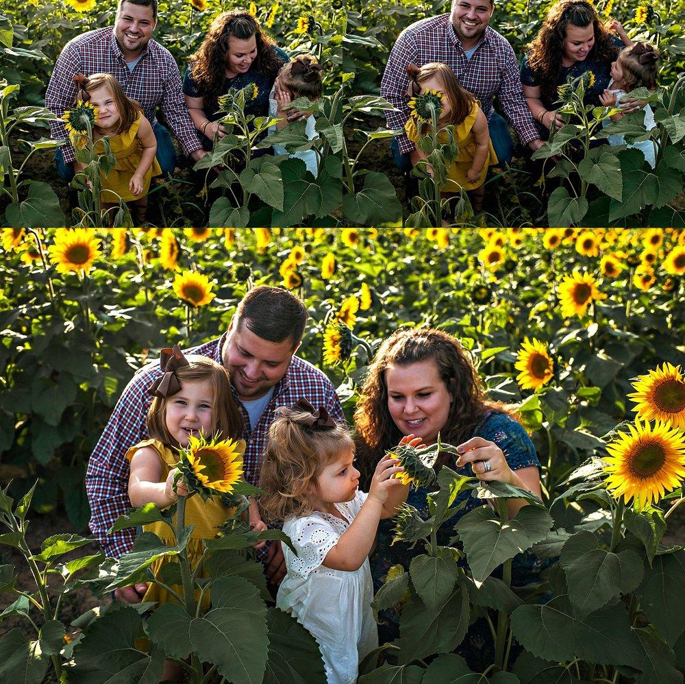 Rutherford-family-cleveland-photographer-lauren-grayson-sunflower-field-session_0011.jpg