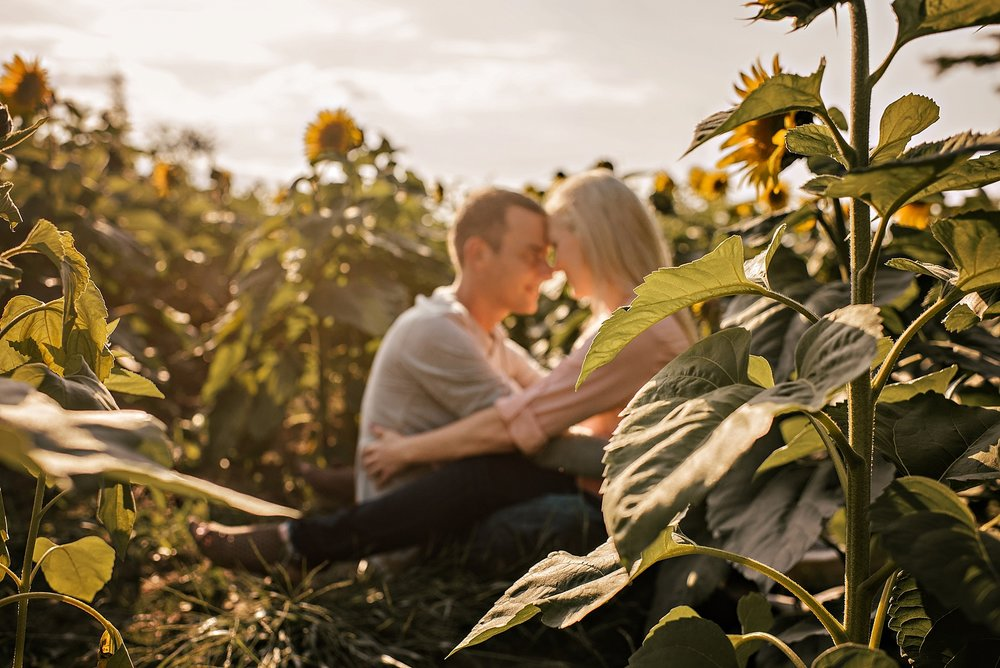 Lori-and-mike-akron-ohio-photographer-lauren-grayson-sunflower-field-session_0015.jpg