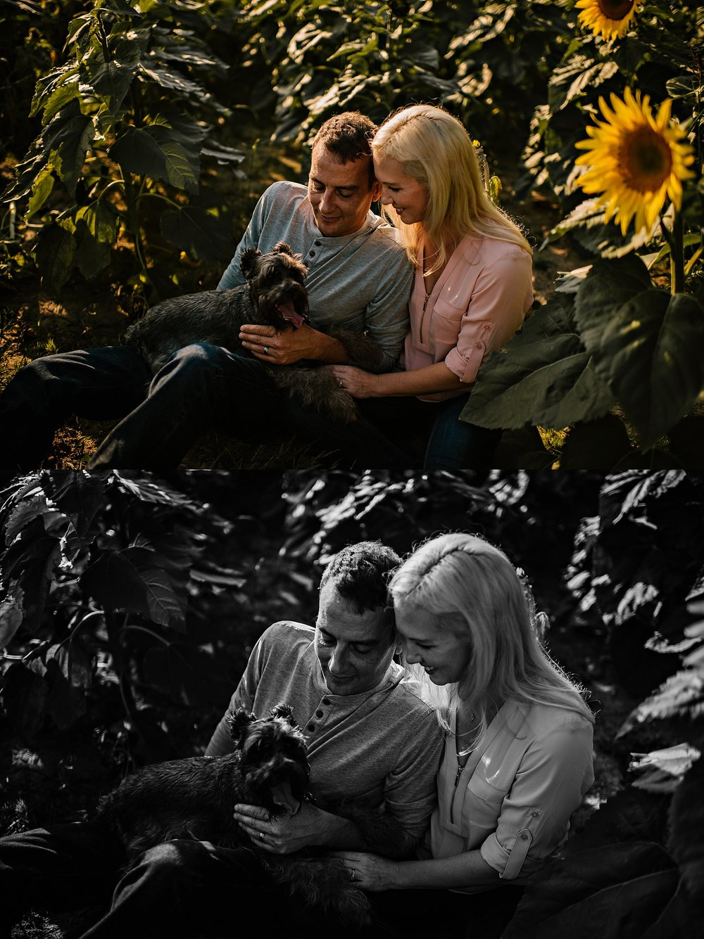Lori-and-mike-akron-ohio-photographer-lauren-grayson-sunflower-field-session_0022.jpg