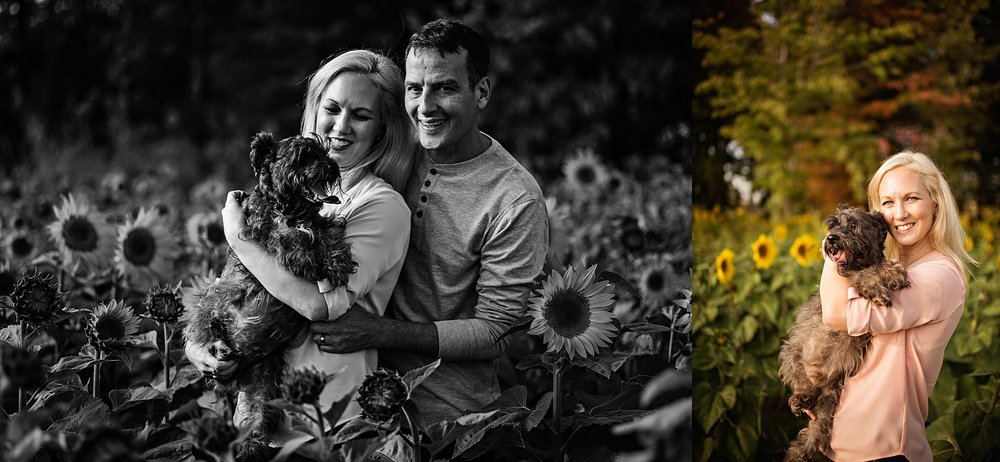 Lori-and-mike-akron-ohio-photographer-lauren-grayson-sunflower-field-session_0027.jpg