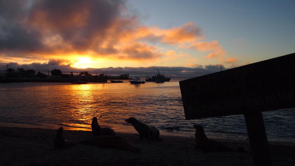 Sealions at Sunset ( San Cristobel, The Galapagos Islands )