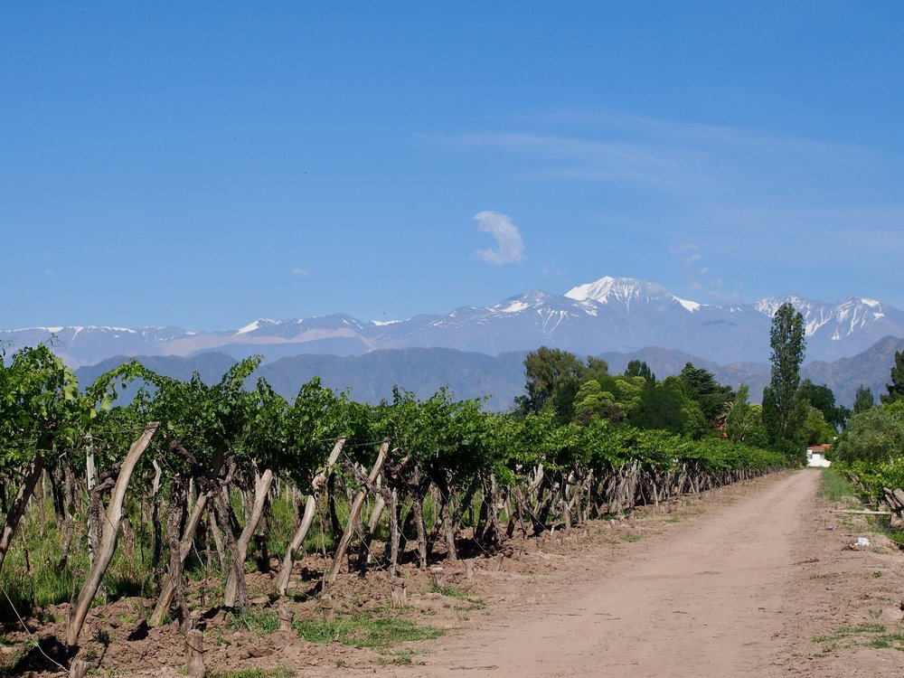 View from the Vineyard at Bodega Kaiken ( Maipu, Mendoza, Argentina )