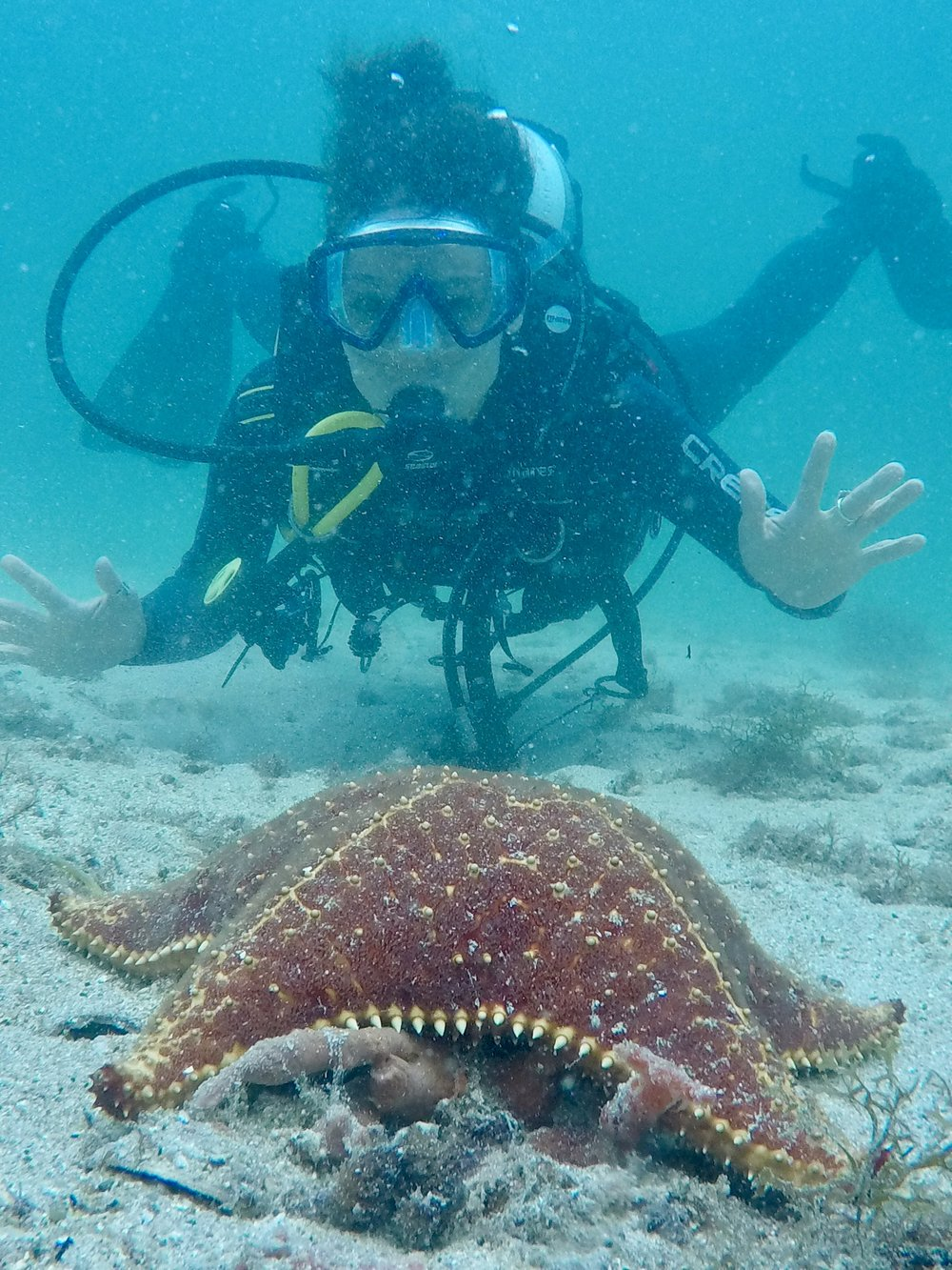 Is that not the biggest starfish you've ever seen? (Ilha Grande,Rio State, Brazil)