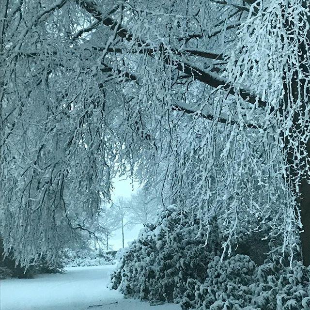 Het is hier zo mooi! #winterwonderland2017 #sneeuw #snow #kerstsfeer #sneeuwlandschap