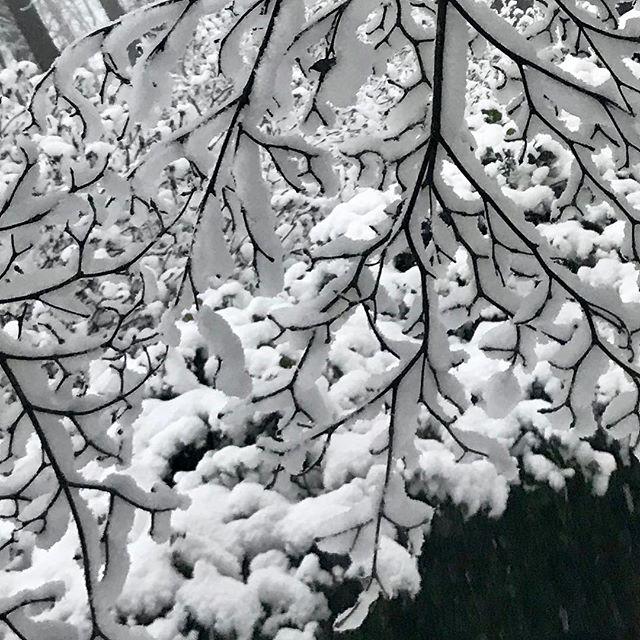 Betoverende sneeuw! Je blijft fotograferen.. #sneeuw #betoverd #winter2017
