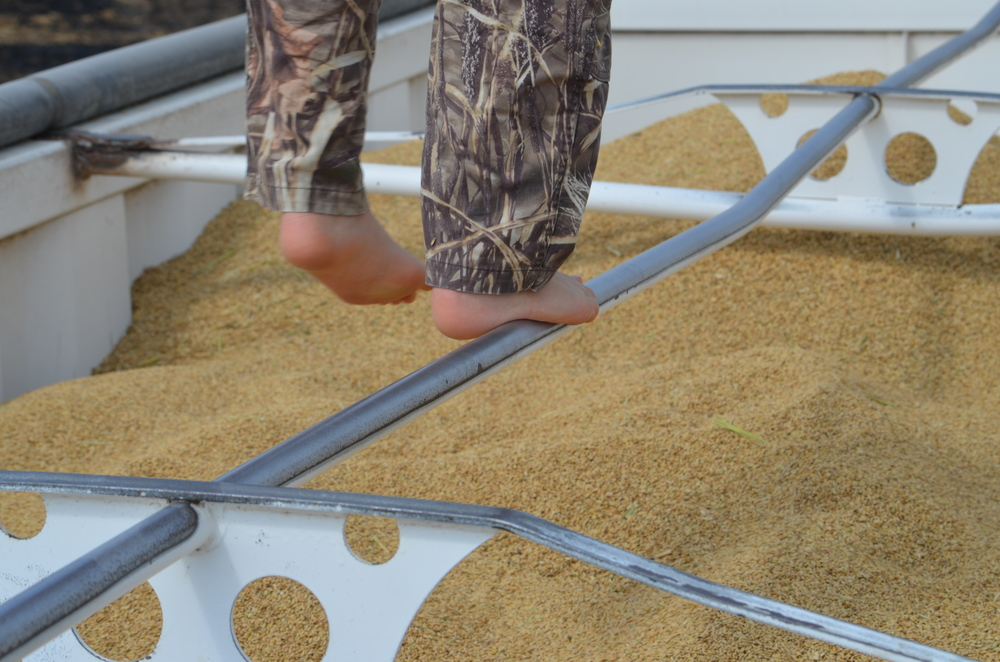 standing on the top bar of a grain truck full of harvested rice