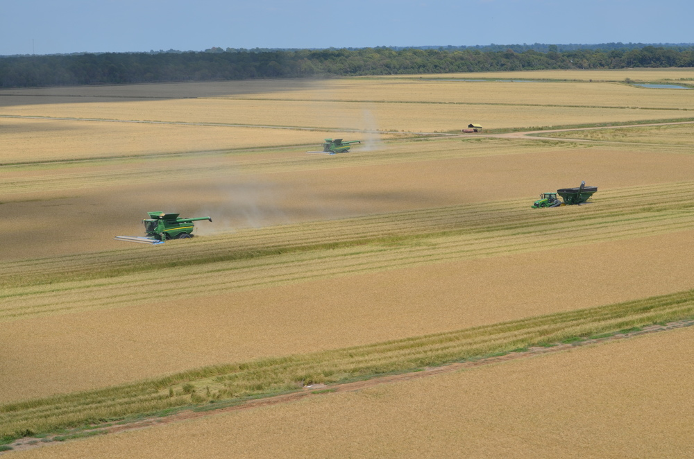 harvesting one of the zero grade fields on our land:  combines and tractors pulling grain carts with ease