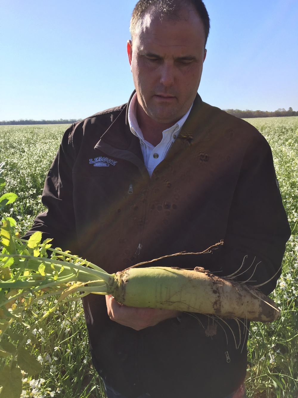 Jim holding a radish from Whitaker Farms' cover crop