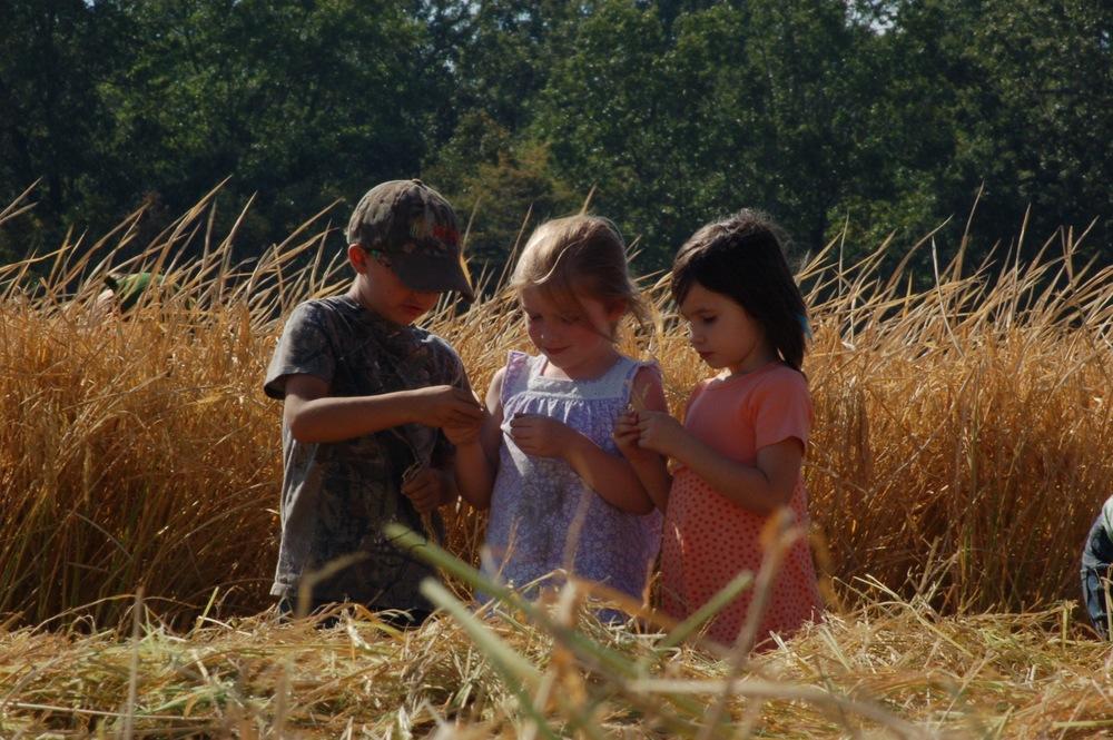 friends in a non-organic rice field