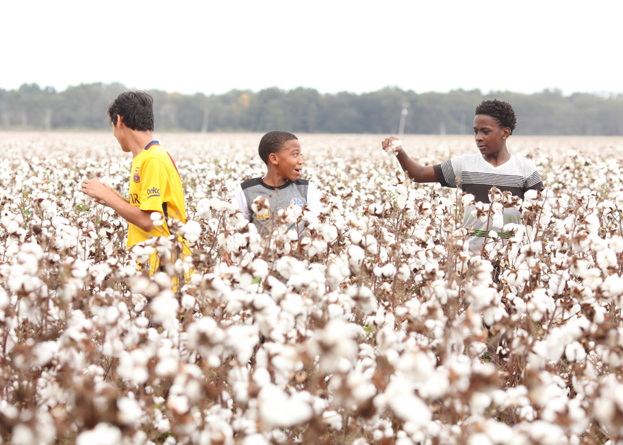Boys from Delta Street Academy visit their first cotton field in southeast Arkansas.