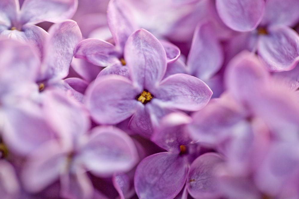 flowers (8 of 9).jpg