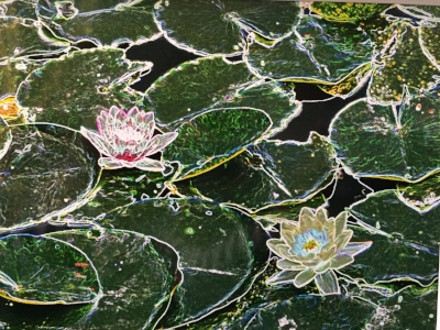 "2016 Photo-edited/photo-artistic winner: Ralph Hamor, ""Water Lilies"""