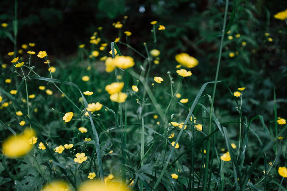 nature flower stavanger