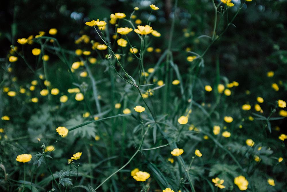 stavanger nature flower