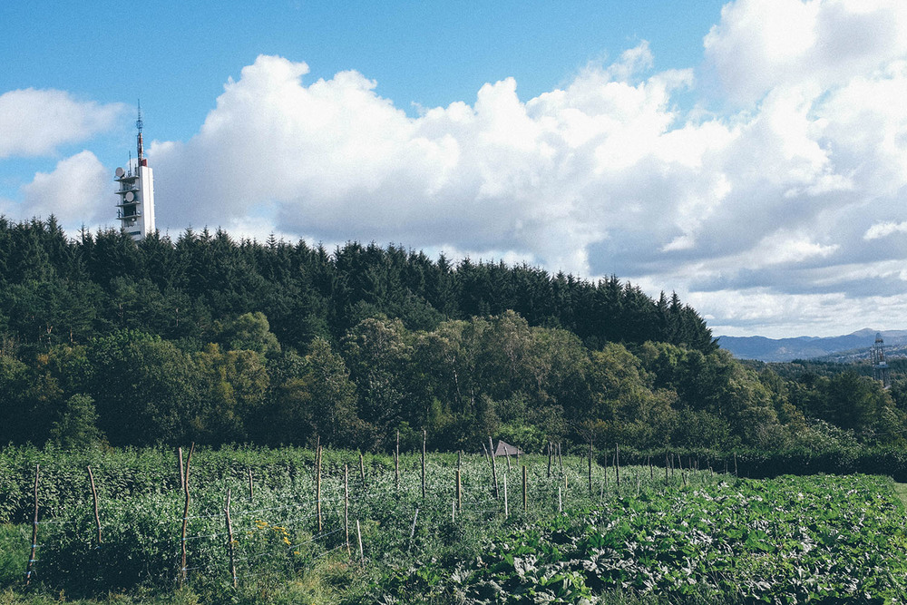 ullandhaug stavanger farm