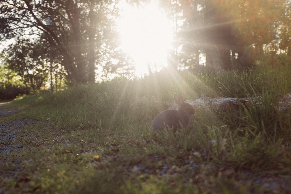 ullandhaug stavanger rabbit
