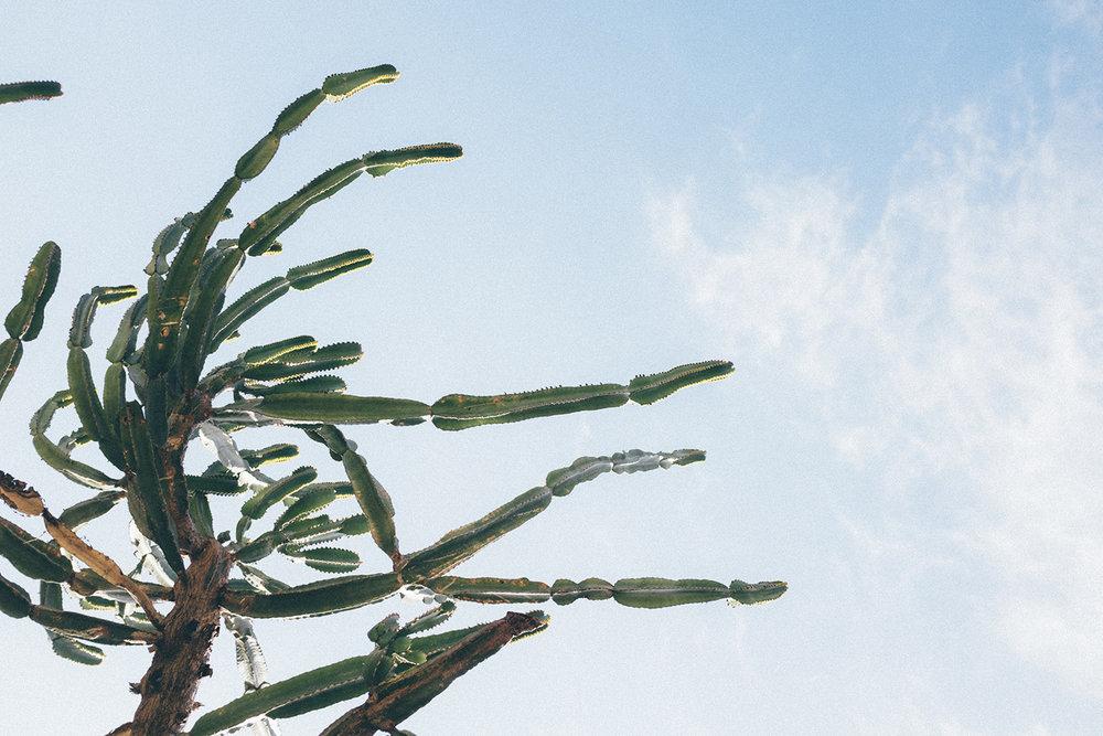 cactus barcelona jardins travel spain mont juic