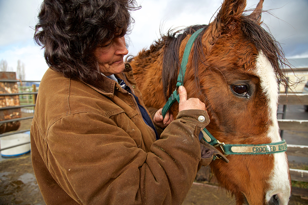 han-20151211-news-injuredhorse-knh001.jpg