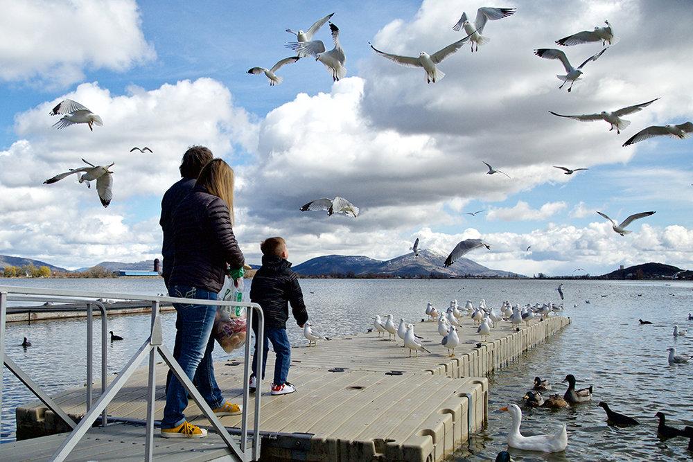 han-20160323-news-lakeewauna-birdfeeding-knh001.jpg