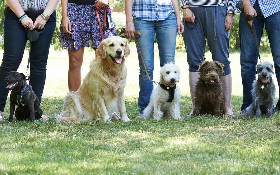 San Antonio Group Dog Training