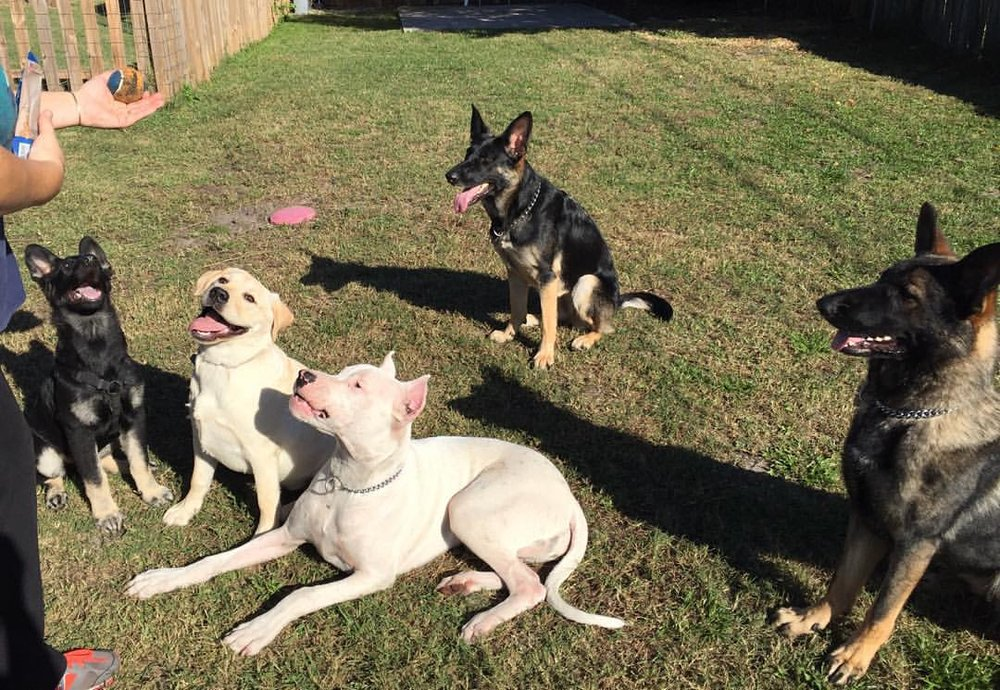 Austin Group Dog Training