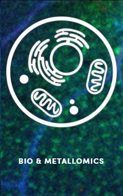 Copy of Bio and Metallomics