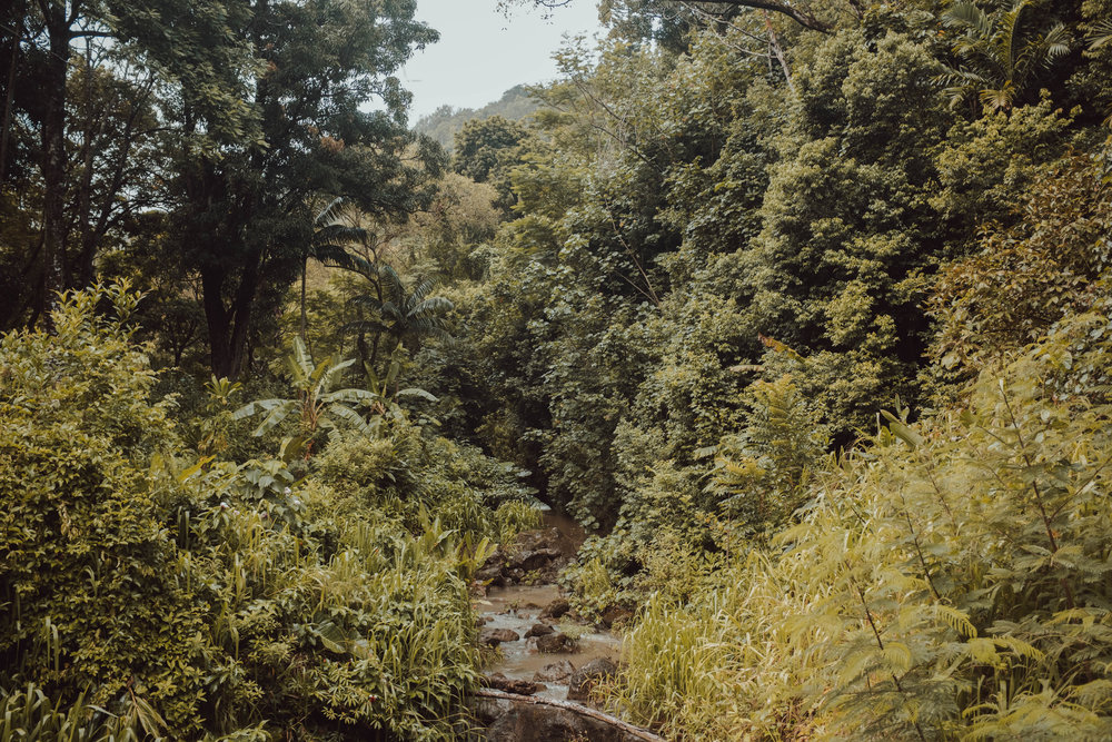 DSCF1979.jpg