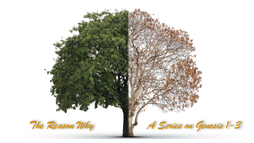 "- Series: ""The Reason Why""Who is God? What is Man? What happened to cause the fallen-ness we see in ourselves and in the world today, and how God introduced his plan to redeem creation."