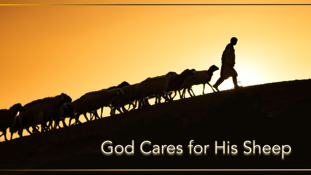 "- Series: ""God Cares for His Sheep""A two-week series on shepherding."