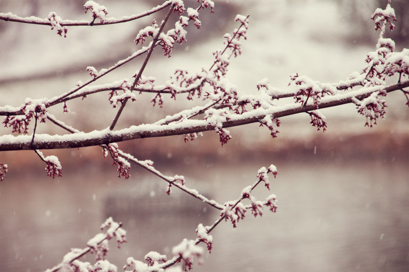 It takes fortitude and conviction to brave the cold and blossom