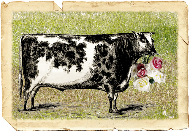 Ferdinand the Bull by Buonaventura and Carla