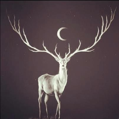 As an Earth creature, the Stag helps keep you grounded. The Spirit of Stag provides protection and lets you explore new dimensions without fear of losing your sense of Self.  Image found on Pinterest