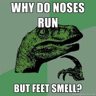 noses_run.jpg