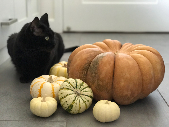 halloween - 6.jpg
