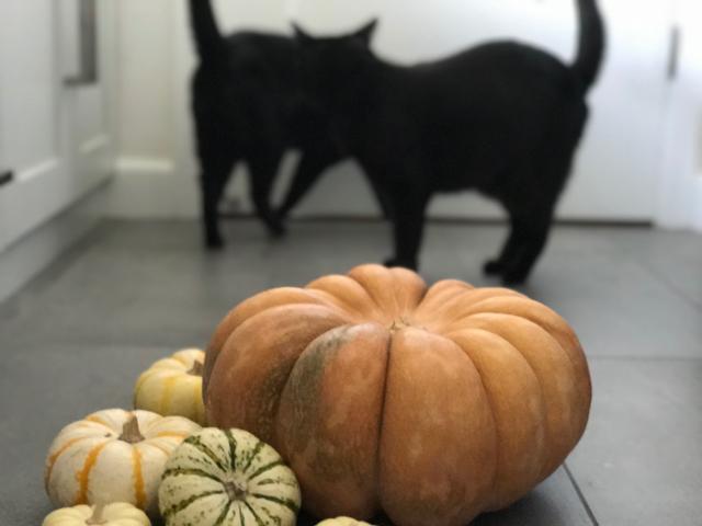 halloween - 23.jpg