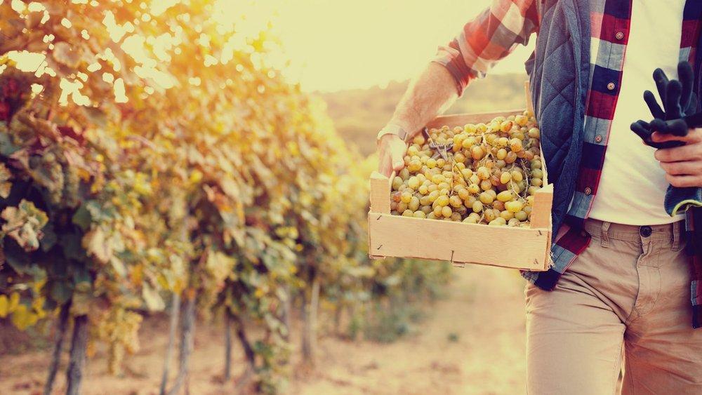 cropped-lfc_vineyardsunset.jpg