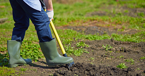 graphicstock-image-of-male-farmer-digging-in-the-garden_rBbHKgIolZ.jpg