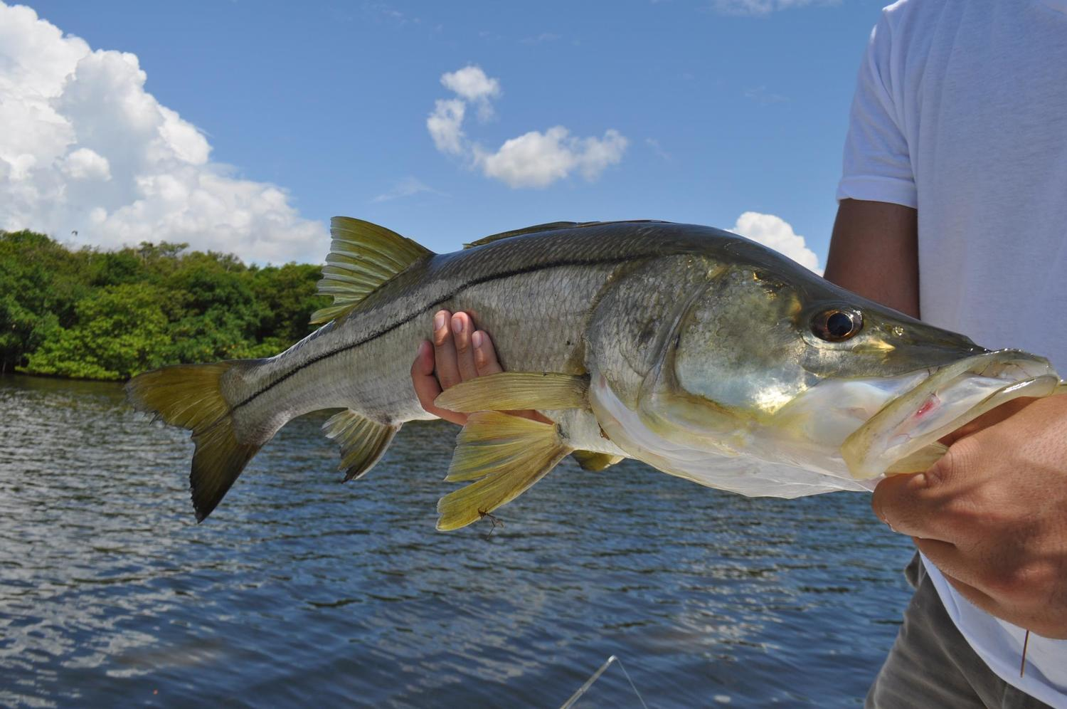 miami snook fishing charters biscayne bay flats flamingo guide