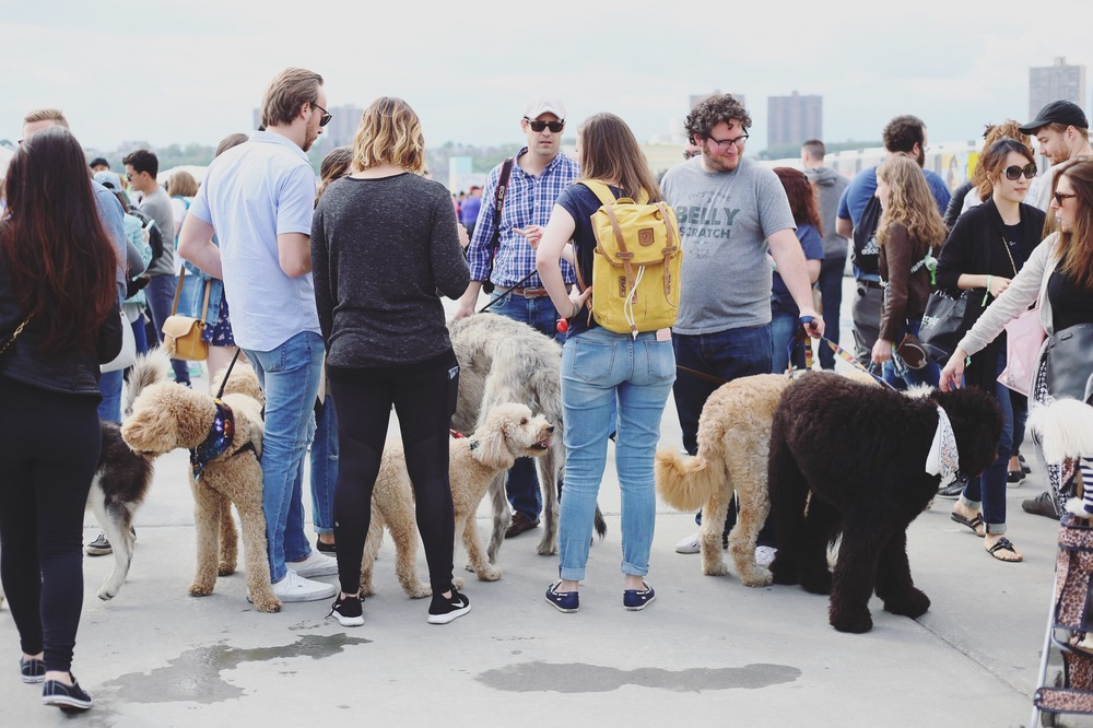 Hudson River Park's Pier 97 was overrun with pups, food, and good times.