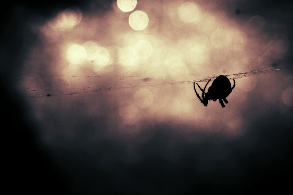 Image source:  https://pixabay.com/en/spider-animal-insect-spiderweb-407141/