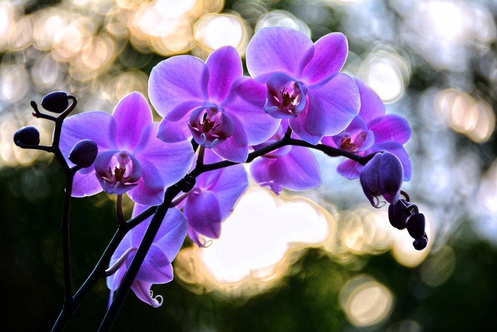 flower-3352472_1920.jpg